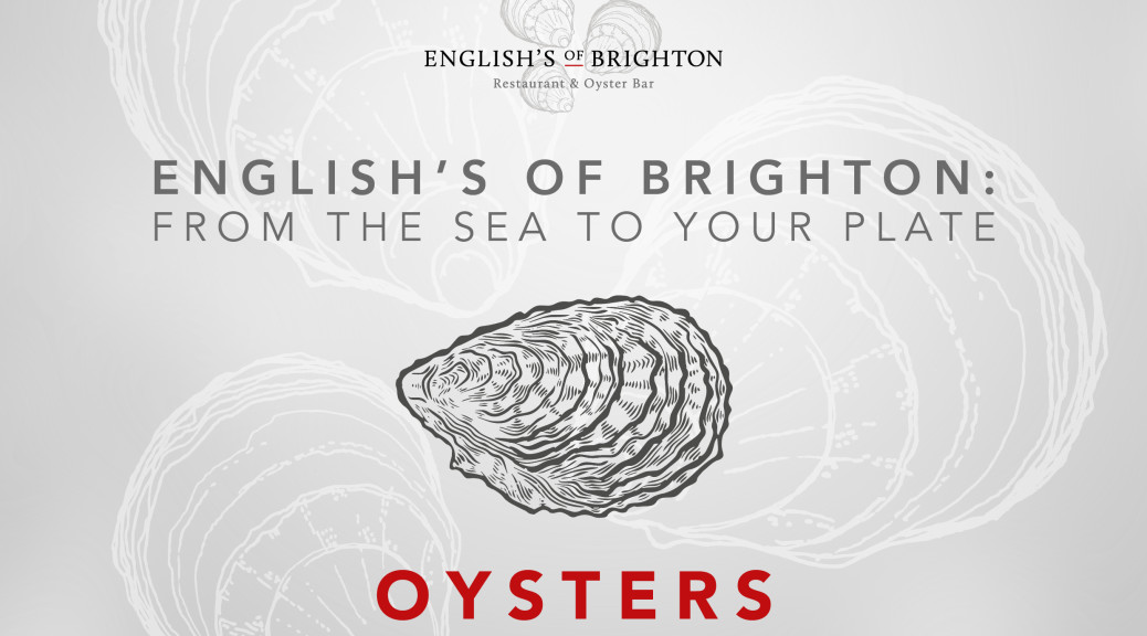 English's-Blog-Post-Artwork-Oysters-V1-290318