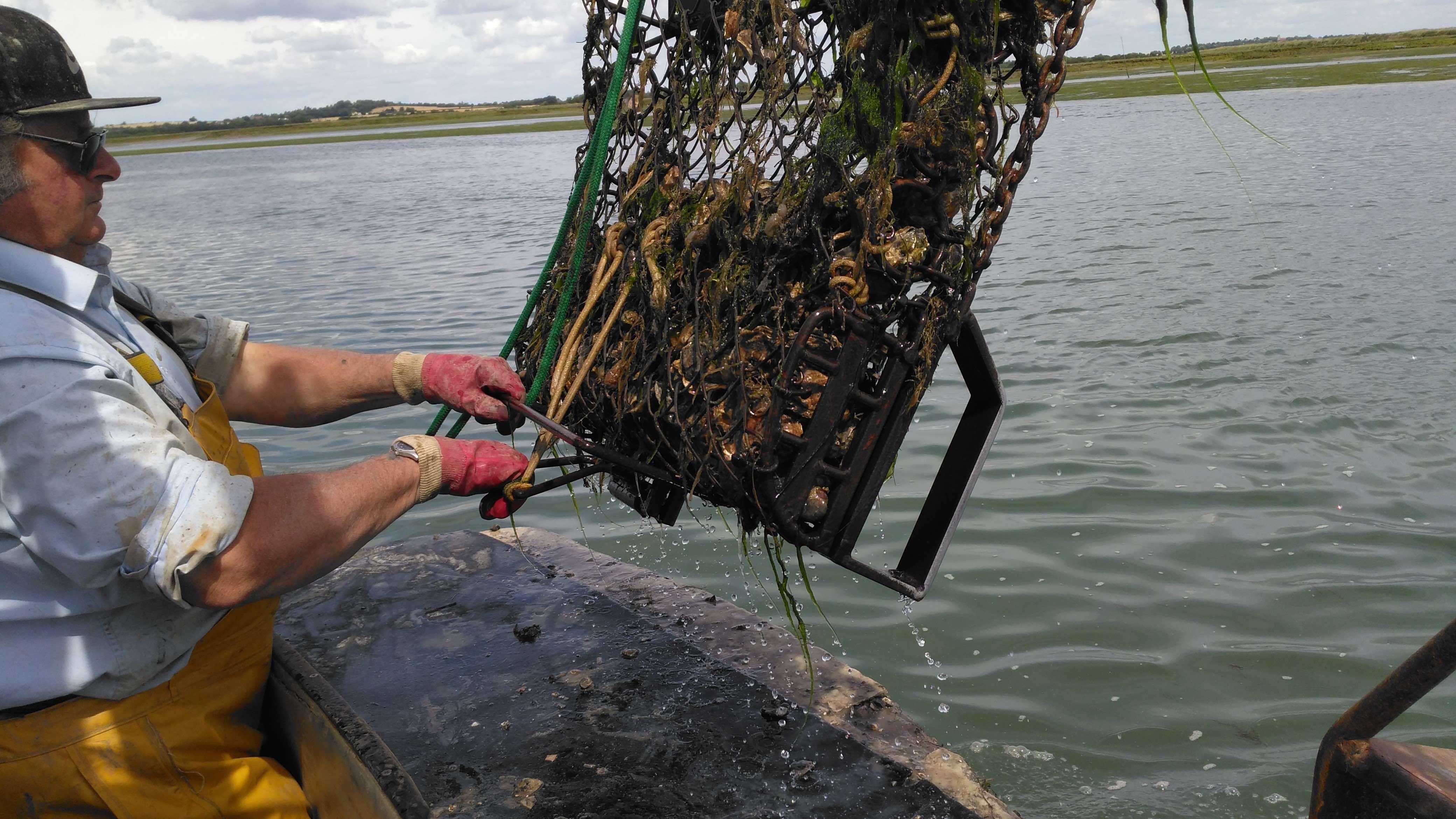 Oyster blog 2