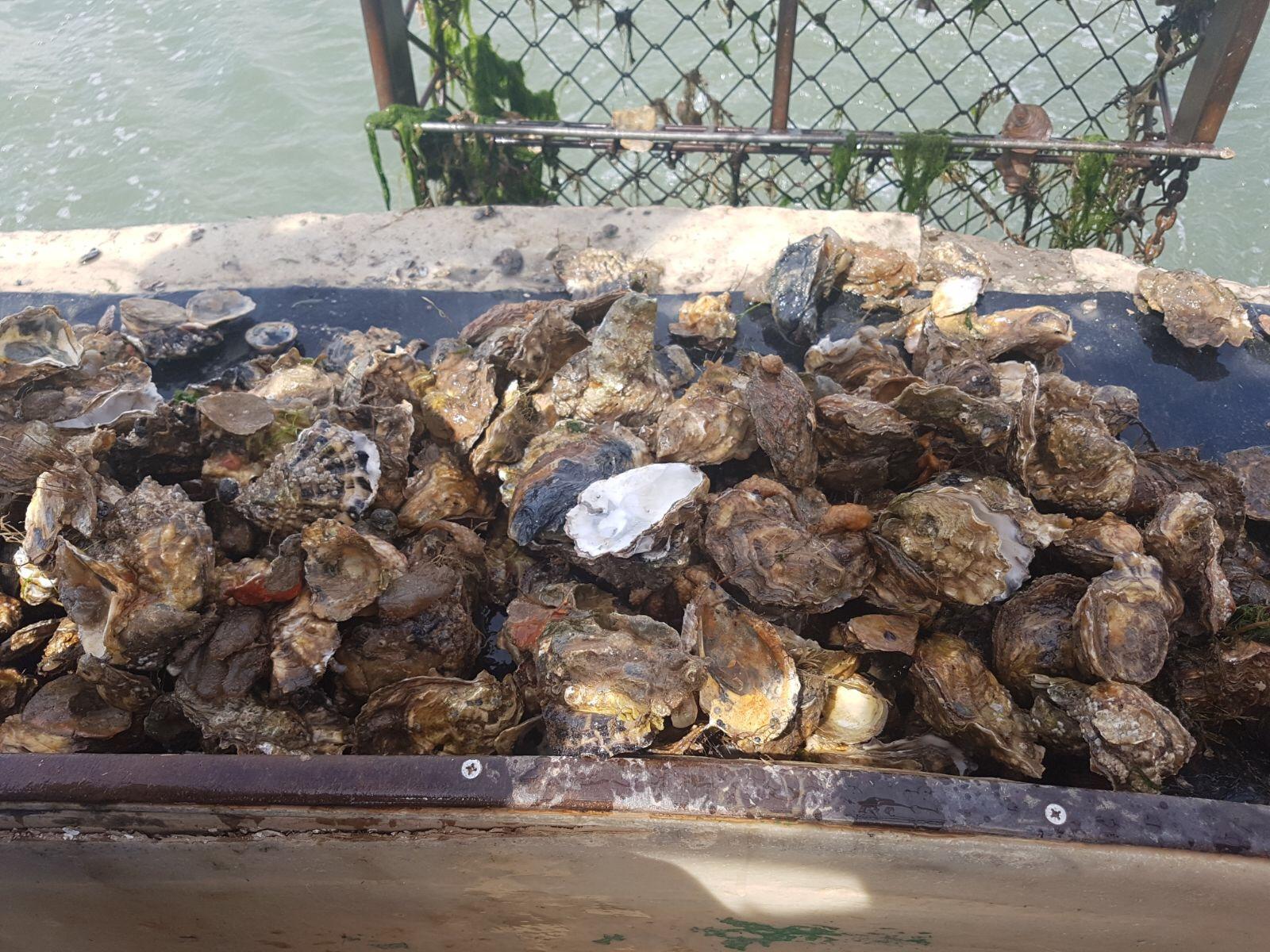 oyster blog 3